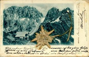 Material Ak Neustift im Stubaital in Tirol, Innsbrucker Hütte, getrocknetes Edelweiß