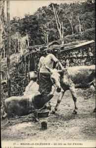 Ak Nouvelle-Calédonie Neukaledonien, Bewohner mit Esel und Schwein