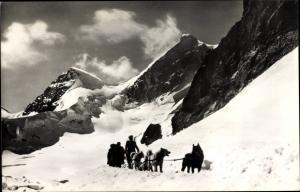 Ak Jungfraujoch, Polarhunde, Schlittenhunde im Gebirge, Schnee