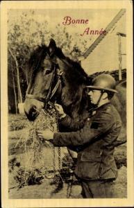 Ak Bonne Anne, Pferd
