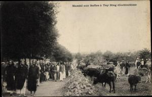 Ak Tay Ninh Vietnam, Marche aux Bufles