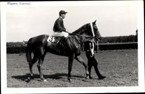 Ak Rennpferd Figaro, Jockey Lacina
