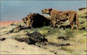 Künstler Ak Wilhelm Kuhnert, Beute spähende Löwen