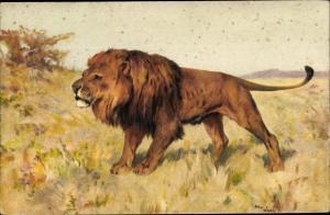 Künstler Ak Löwenmännchen in der freien Natur