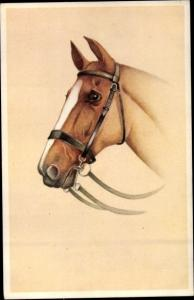 Künstler Ak Pferd, Halfter, Portrait