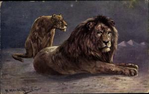 Künstler Ak Müller, M. jun., Löwin und Löwe in der Wüste, Pyramiden