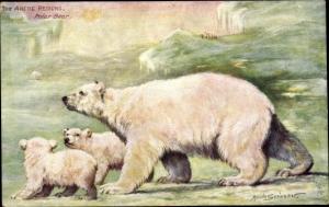 Künstler Ak Scrivener, Maude, The Arctic Regions, Polar Bear, Eisbären, Tuck 9167