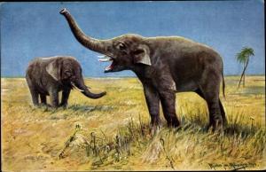 Künstler Ak Müller, M. jun., Zwei Indische Elefanten in der Savanne