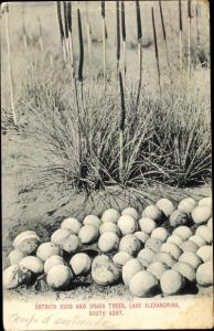 Ak Lake Alexandrina South Australia, Ostrich Eggs and Grass Trees
