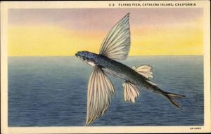 Künstler Ak Catalina Island Kalifornien USA, Flying Fish, fliegender Fisch