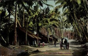 Ak Colombo Ceylon Sri Lanka, Galle Road, Palmen