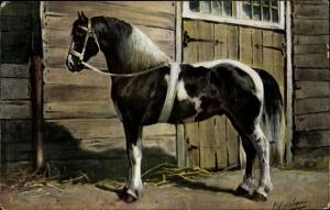 Künstler Ak Erelman, O., Het Deensche paard, Dänisches Pferd