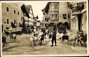 Ak Mittenwald in Oberbayern, Heimkehr der Ziegen von der Weide