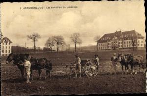 Ak Grangeneuve Kt Freiburg, Les semailles de printemps, Pferdepflüge auf dem Feld