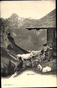 Ak Schweiz unbekannt, Sur l'alpe, Ziegen