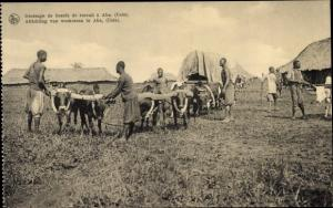 Ak Uele DR Kongo Zaire, Africhting van werkossen te Aba