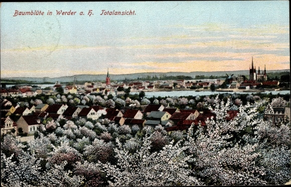 Ak Werder an der Havel, Baumblüte, Panorama 0