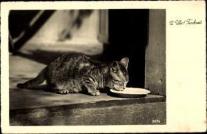 Ak Katze, Getigert, 12 Uhr! Tischzeit