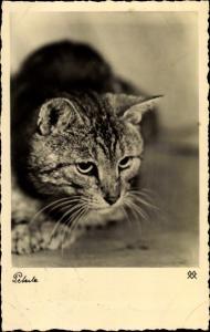Ak Katze, Getigert, Kater Peterle