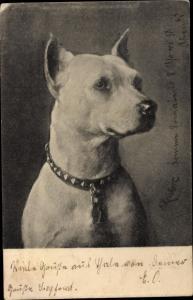Ak Hund mit Halsband, Hundeportrait