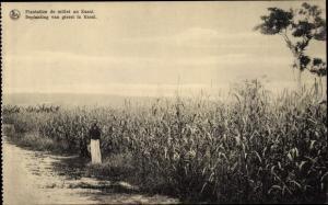 Ak Kasai Demokratische Republik Kongo Zaire, Plantation de millet, Beplanting van gierst
