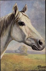 Künstler Ak Thomas, Paul, Pferdeportrait, weißes Pferd