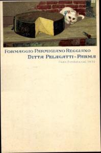 Litho Formaggio Parmigiano Reggiano, Ditta Pelagatti Parma, Käse, Hauskatze