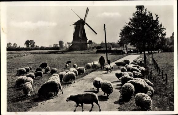 Ak Lochem Gelderland, Schaapherder bij de Zwiepse molen 0