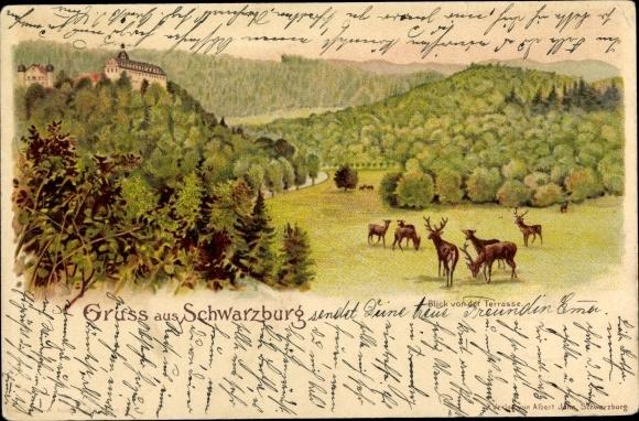 Litho Schwarzburg in Thüringen, Blick von der Terrasse, Hirsche 0