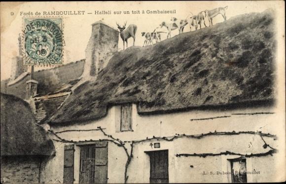 Ak Rambouillet Yvelines, Hallali sur un toit a Gambaiseuil 0