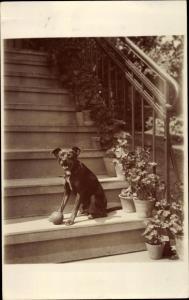 Foto Ak Hund mit Ball auf einer Treppe, Hundeportrait