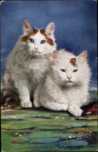 Künstler Ak Müller, G., Zwei weiß braune Katzen