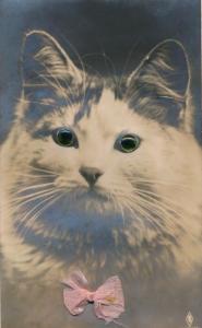 Stoff Glasaugen Ak Katze, rosa Schleife