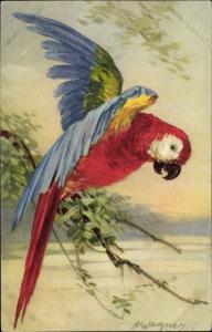 Künstler Ak Wagner, A., Ara Papagei