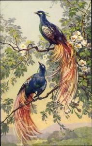 Künstler Ak Pfauen auf einem Ast, Baumblüte