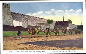 Ak Beijing Peking China, Camel Train, Wall, Kamele