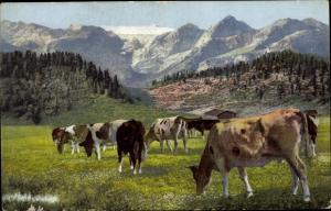 Ak Kühe auf der Alm, Berge