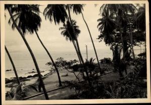 Foto Ak Kindia Guinea, Bord de Mer avec Palmiers