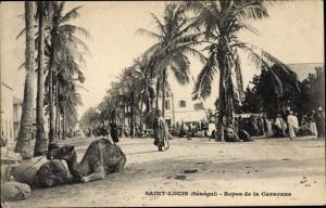Ak Saint Louis Senegal, Repos de la Caravane, Kamele, Palmen, Straßenpartie