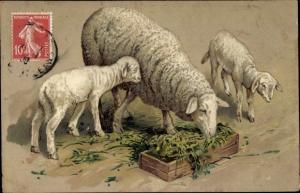 Ak Schafe beim Fressen, Lämmer, Futtertrog, Gras