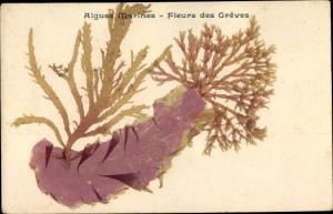 Ak Algues Marines, Fleurs des Greves
