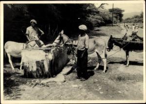 Foto Ak Kindia Guinea, Abreuvoir avec des Mules