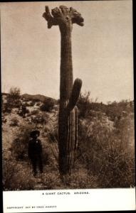 Ak A Giant Cactus, Arizona, Elderly Man
