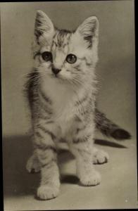 Ak Kleine getigerte Katze