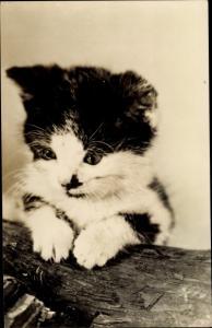 Ak Kleine schwarz weiße Katze