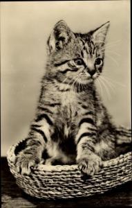 Ak Kleine getigerte Katze im Weidenkorb