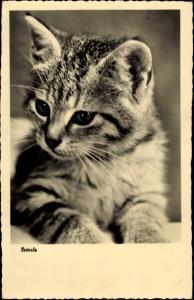 Ak Peterle, kleine getigerte Katze