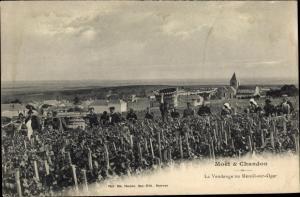 Ak Moet et Chandon, la Vendange au Mesnil sur Oger, Reklame, Weinlese