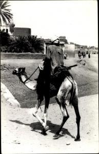 Foto Ak Ägypten, Kamelreiter
