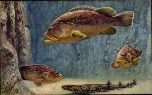 Ak Aquarium de Monaco, Katzenhai, Riesenbarsch, Scyllium, Epinephelus Gigas